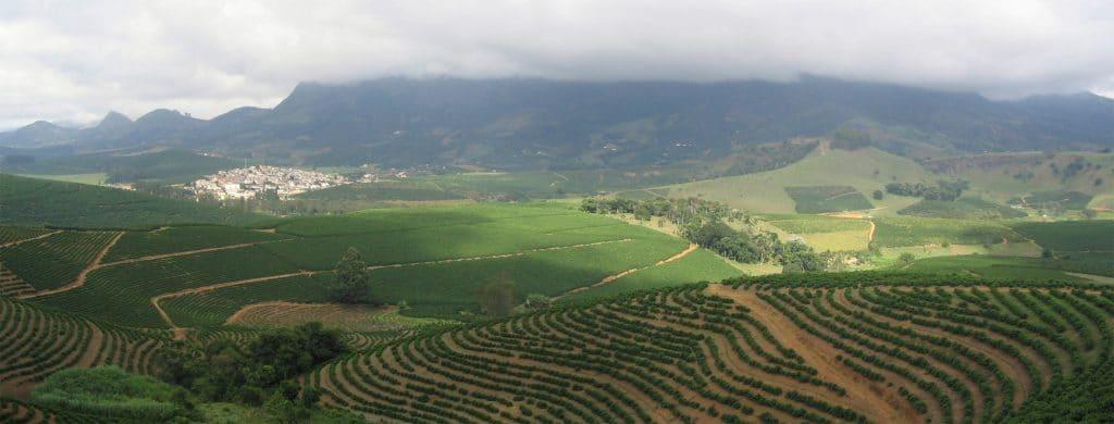 Koffie plantage Arabica bonen